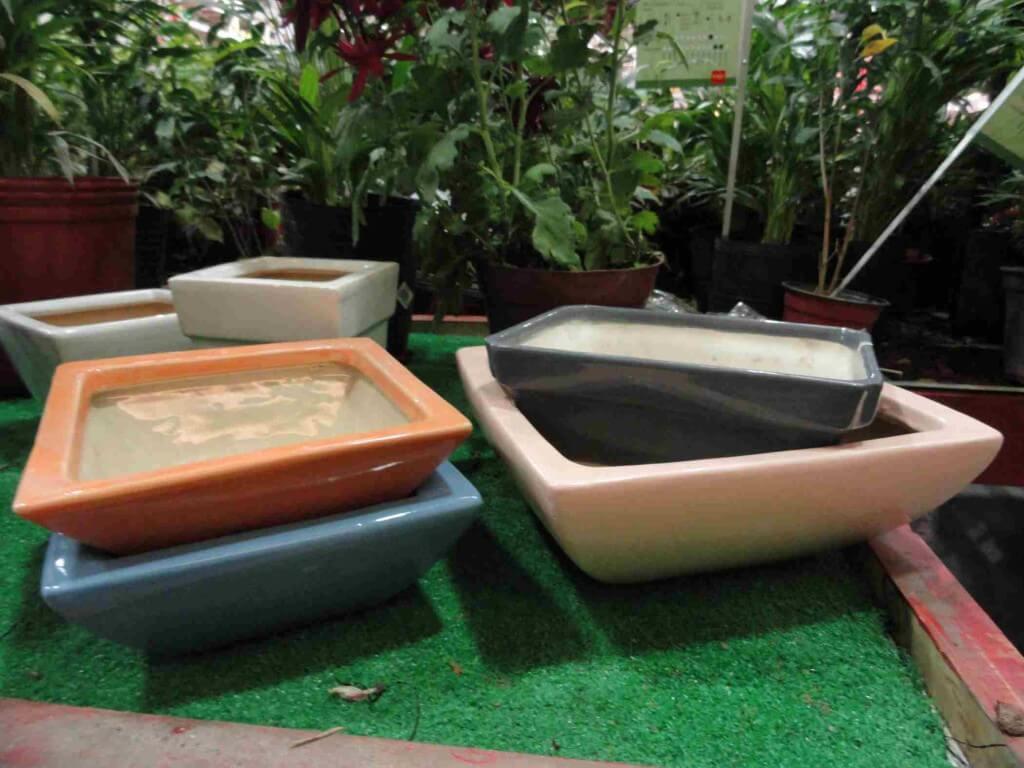 Comprar ofertas platos de ducha muebles sofas spain - Como se cuida un bonsai ...