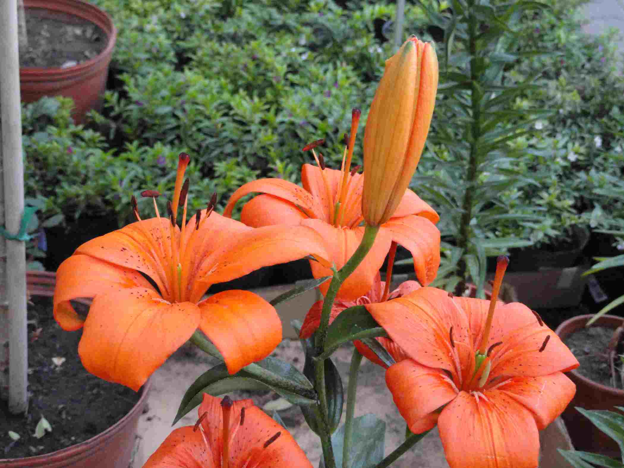 Jardin de flores el jardin en casa for Plantas exoticas para jardin