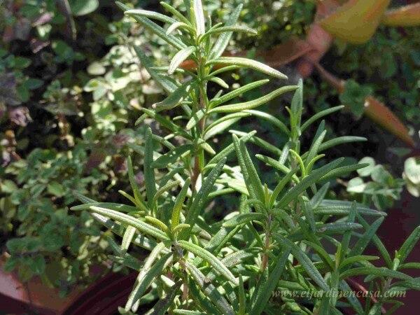 jardineras | el jardin en casa