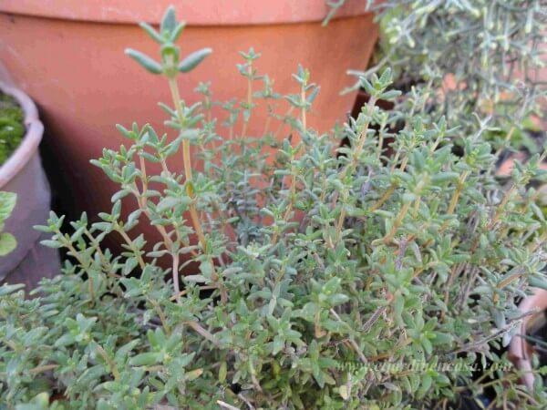 cómo combatir babosas y caracoles | el jardin en casa