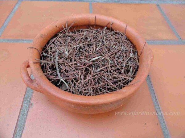 Acolchado mantillo o mulching el jardin en casa for Mantillo o sustrato