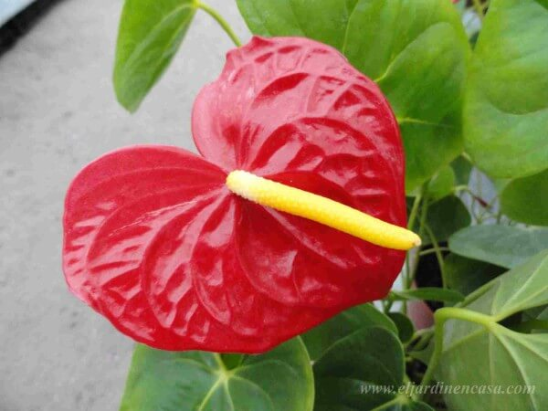 plantas ornamentales y sus nombres imagui