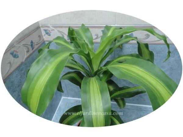 Plantas ideales para el ba o iii el jardin en casa - Plantas en el bano ...