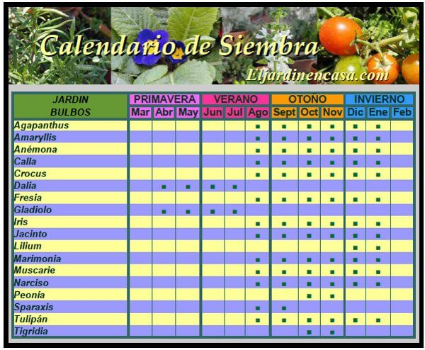 Calendario de Siembra Bulbos