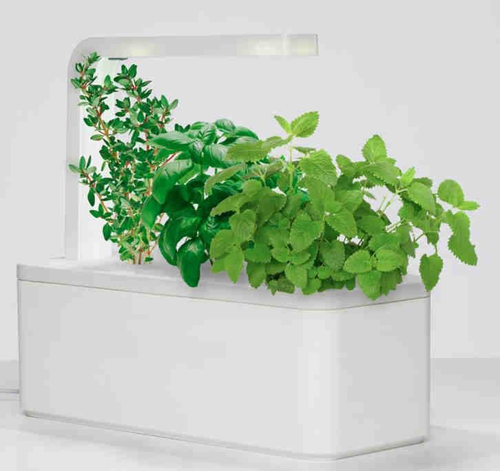 jardin inteligente hierbas