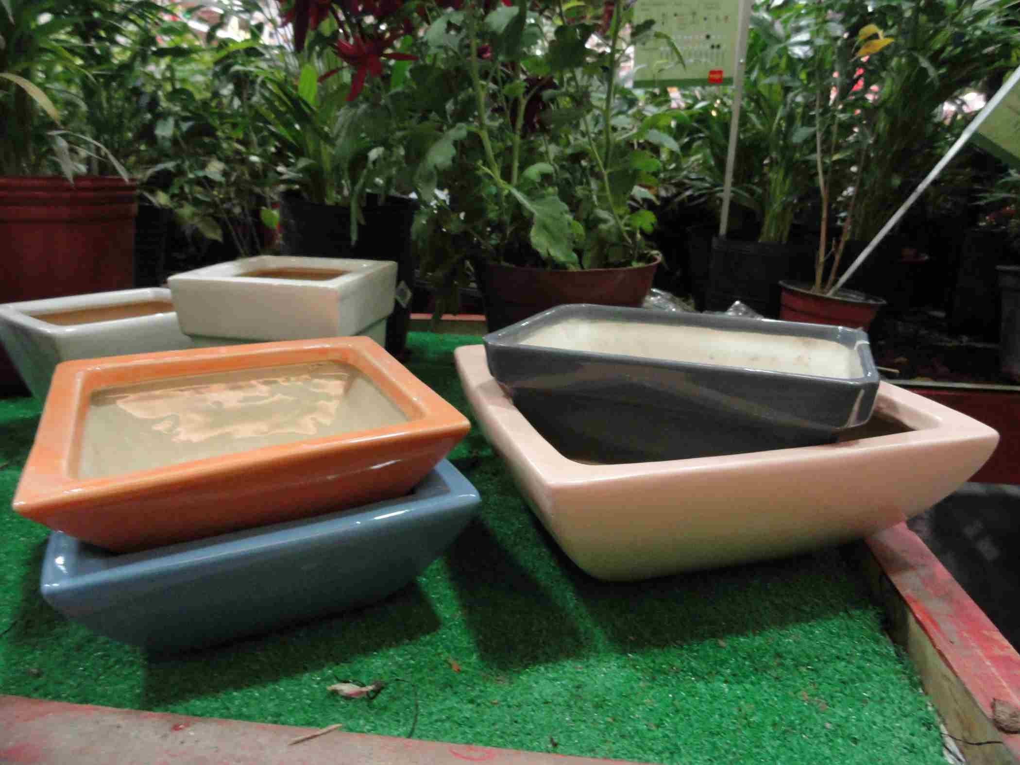 Macetas bonsai el jardin en casa - Macetas de jardin ...