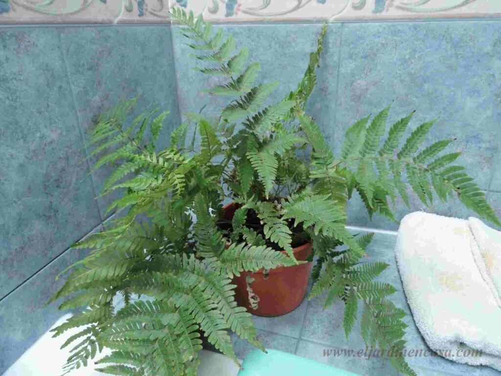Plantas para el ba o i el jardin en casa - Plantas en el bano ...