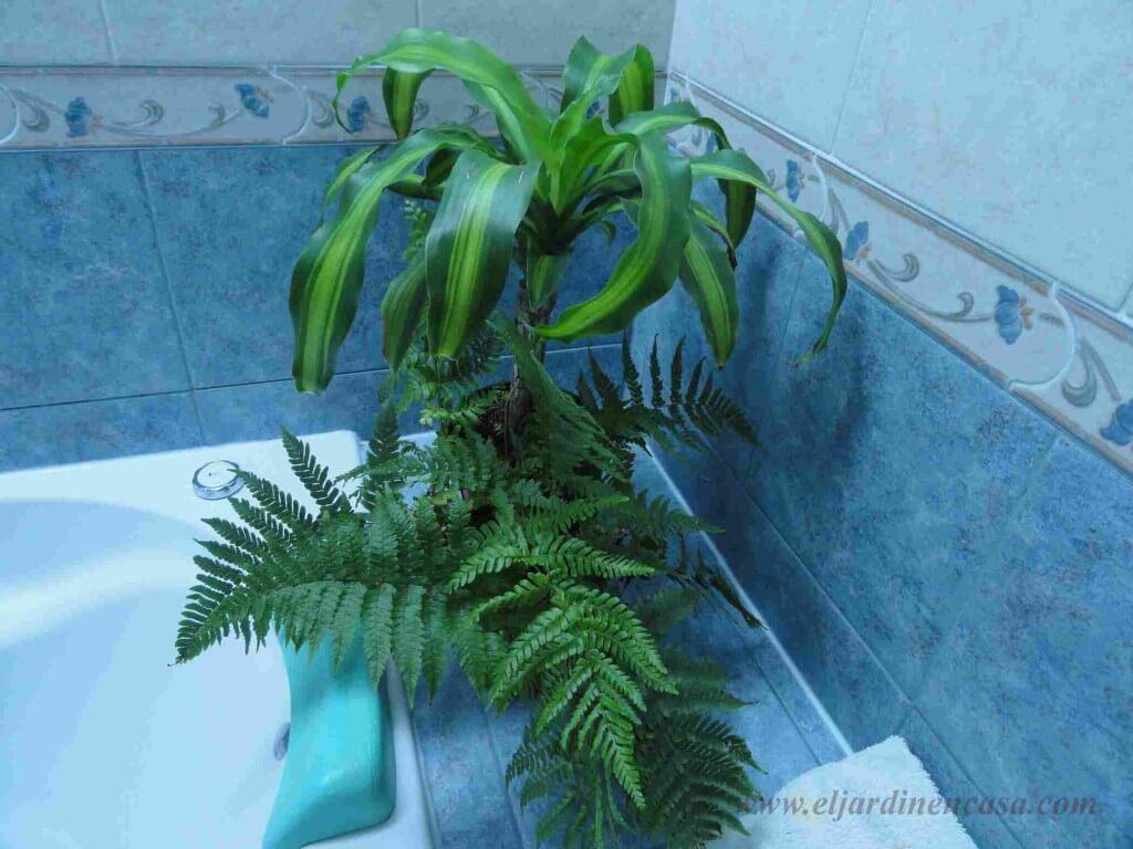 Plantas para decorar el baño -II- | El Jardin en Casa